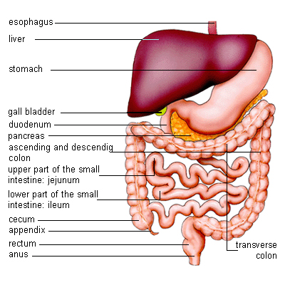 Majid dr ali syndrome leaky gut